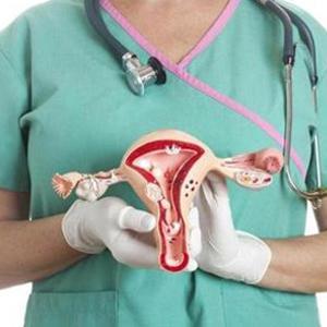 Макет матки у врача