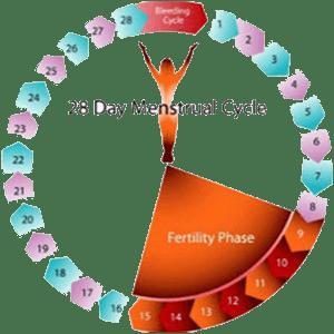 Дни цикла