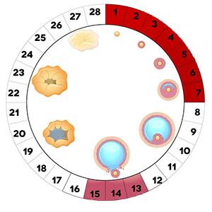 Ановуляторный цикл