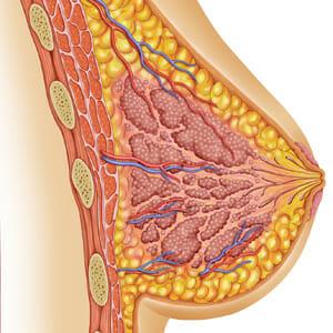 Изображение груди