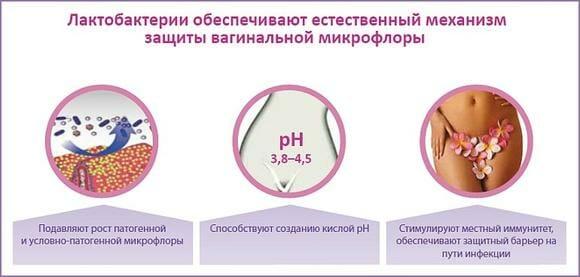 Защита лактобактерий