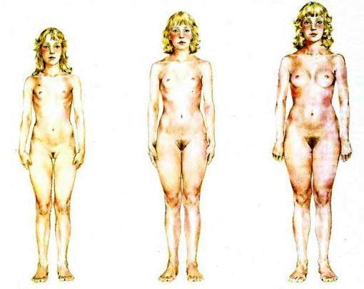 этапы роста молочных желез