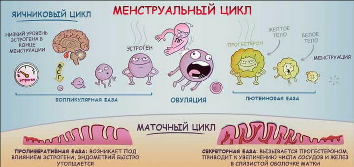 Смешное изображение менструального цикла