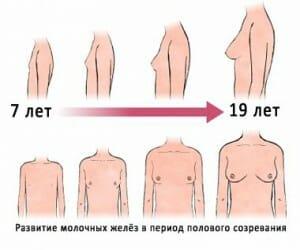 Этапы роста груди рисунок