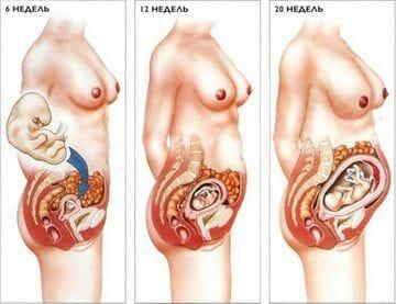 Плод на разном сроке беременности